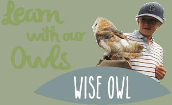 Owl education programmes