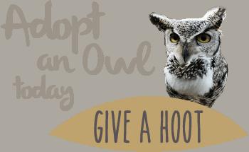 Adopt an owl today