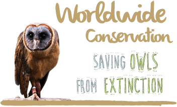 Saving owls from extinction