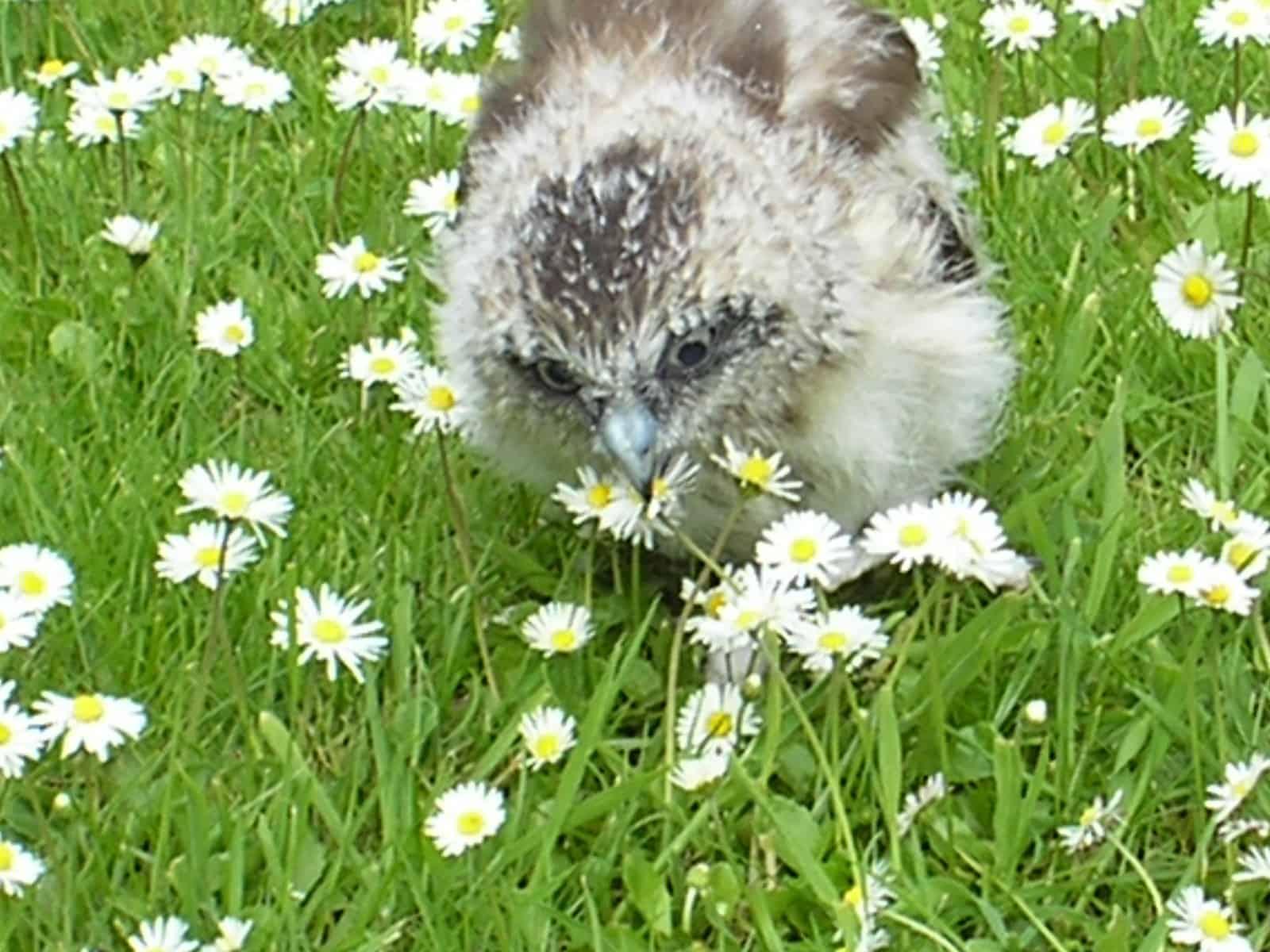 The last daisy.........!